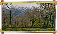 Palampur Jungle view