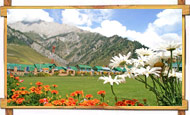 Sonmarg Flowers View